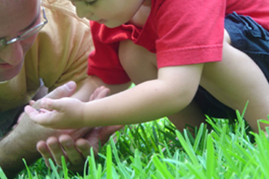 Father and son looking for insects in the grass Page 33