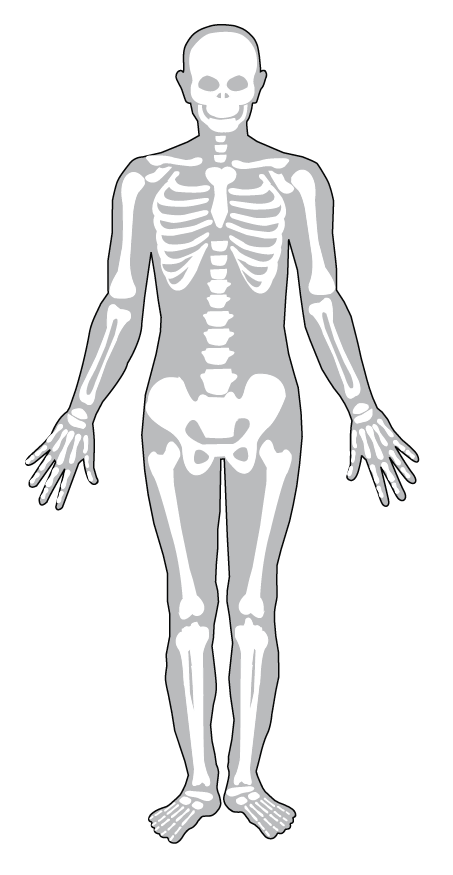 Gray human figure drawing with white bones.